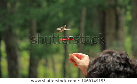 hand that feeds with flowers stock photo © dolgachov