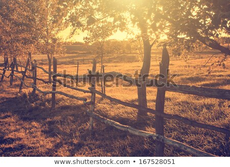 Fall color landscape in rural America stock photo © jaymudaliar