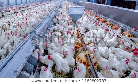 Farming industry Stock photo © Lightsource