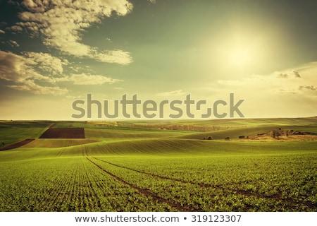 Agrarisch landschap panorama blauwe hemel boven hemel Stockfoto © hraska