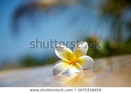 tropicales · hojas · flores · amarillo · mínimo · árbol - foto stock © ivz