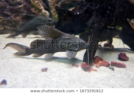 Podwodne Maine życia akwarium wody Zdjęcia stock © kitch