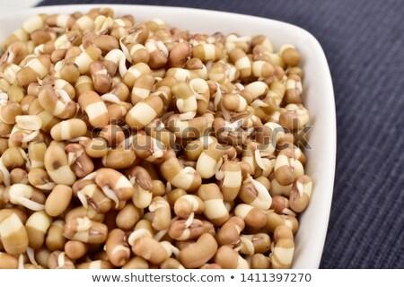 Growing brown bean closeup Stock photo © olandsfokus