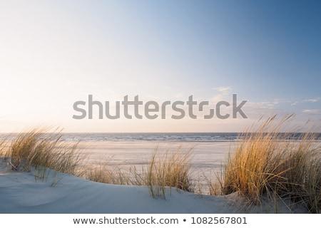 Oceaan groene plant strand water landschap Stockfoto © hlehnerer