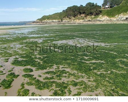 Yeşil yerel gölet doğa yaprak Stok fotoğraf © befehr