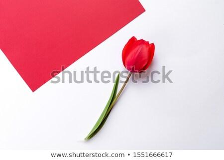 Kırmızı lâle üst görmek çiçekler bahar Stok fotoğraf © Tatik22