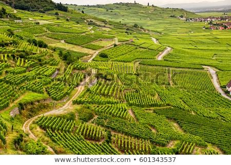 Stock fotó: Szőlőtőke · szőlőskert · Franciaország · levél · ősz · szőlő