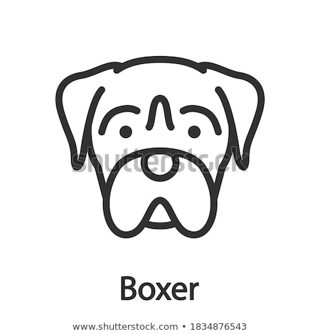 A plain sketch of a boxer Stock photo © bluering