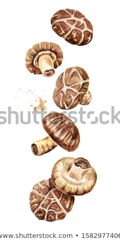 tigela · secas · cogumelos · cortar · marrom - foto stock © saphira