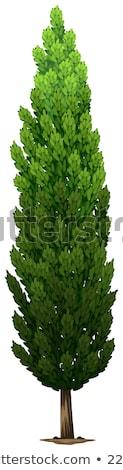 A Swedish columnar plant Stock photo © bluering