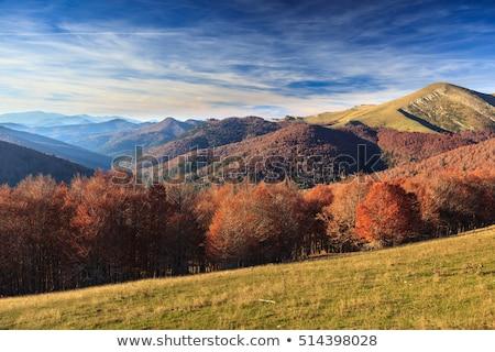 Giungla alberi cielo panorama piedi Europa Foto d'archivio © pedrosala