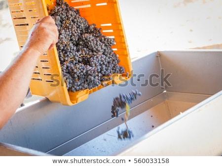 vers · druiven · Mac · wijn - stockfoto © feverpitch