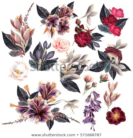 Stock fotó: Nagy · szett · virágok · keretek · gradiens · háló