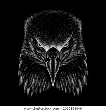 черный · орел · птица · птиц · посмотреть - Сток-фото © stefanoventuri
