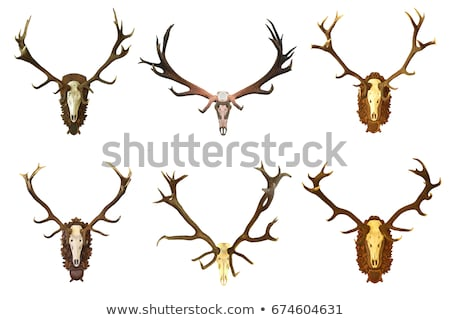 red deer trophy with large antlers Stock photo © taviphoto