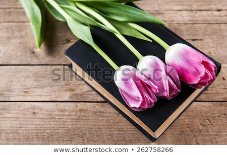 grunge book page with pink tulips Stock photo © lubavnel