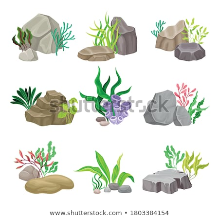Foto stock: Verde · vegetación · profundo · mar · decoraciones · piedras