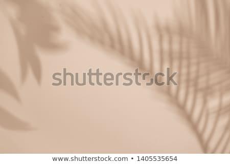 tropicales · feuille · de · palmier · modèle · ombres · couleur · année - photo stock © artjazz