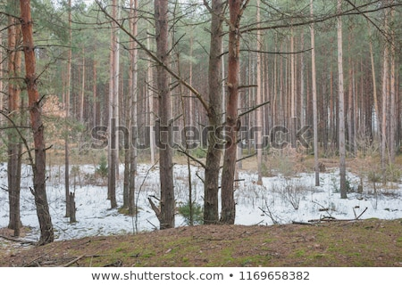 Stock photo: Spring landscape with the last snow