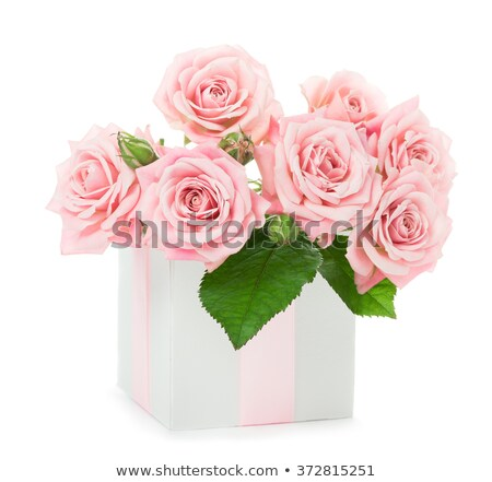 Pink roses bouquet  and gift boxes stock photo © furmanphoto