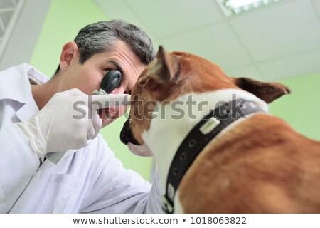 Vétérinaire chiens oeil santé hôpital Photo stock © Kzenon