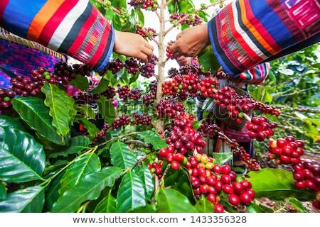 jeune · femme · fille · cerises · jardin · arbre - photo stock © kzenon