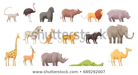 szett · állat · park · illusztráció · fa · művészet - stock fotó © colematt