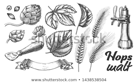 Hop Leaves Barley Wheat Rye Ear Opener Set Vector Stock photo © pikepicture