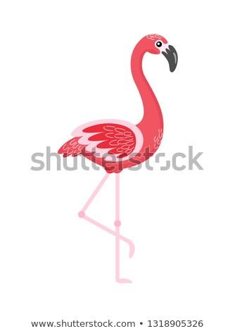 Flamingo Standing with Raised Foot, Bird Vector Stock photo © robuart