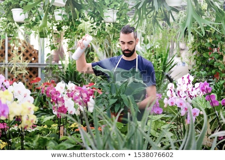 Man At Work As Florist In Flower Shop Using Spray Stock photo © diego_cervo
