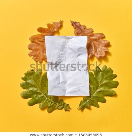 Kâğıt levha düşmek meşe yaprakları kuru Stok fotoğraf © artjazz