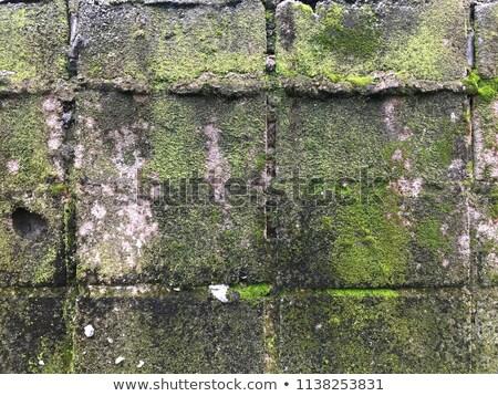 Zöld moha öreg kőfal erdő absztrakt Stock fotó © elxeneize