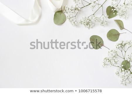 Fotó kirakat virágok modern tavasz fényképalbum Stock fotó © TheModernCanvas