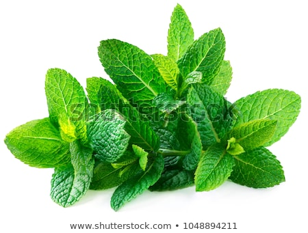 Peppermint Stock photo © Dionisvera