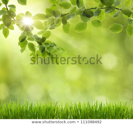 eco nature green and blue abstract defocused background with r stock photo © taiga