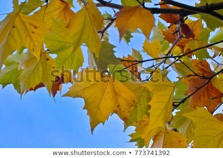 Vermelho folhas floresta piso chuvoso dia Foto stock © Arrxxx