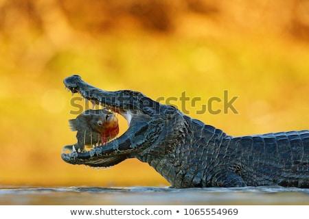 Peixe subaquático água dentes animal medo Foto stock © Mikko