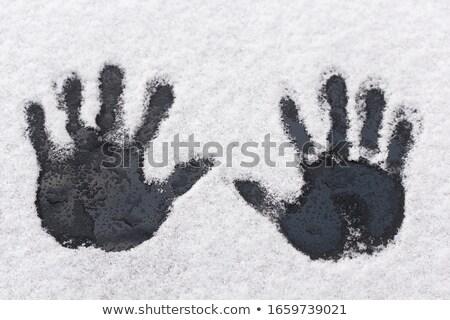 fresche · intatto · neve · inverno · terra · bianco - foto d'archivio © rtimages