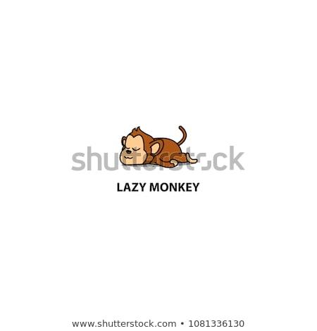 Paresseux singe sauvage noir yeux Photo stock © MojoJojoFoto