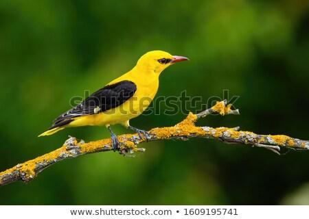 Or oiseau main Photo stock © Vectorex