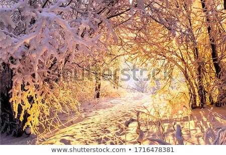 Tél naplemente nap izzó égbolt természet Stock fotó © suerob