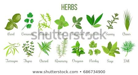 Gyógynövények kert zsálya bazsalikom levél mezőgazdaság Stock fotó © phbcz