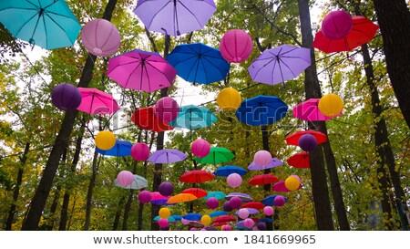 Rainbow above green trees stock photo © inarts