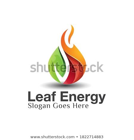 Foglia fiamma verde menta verde foglie muro Foto d'archivio © varts