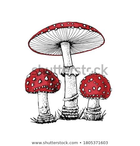 agaric mushrooms Stock photo © Peredniankina