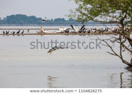 Colony of herons over the river Stock photo © shihina