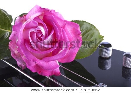 Rose over bass Stock photo © Koufax73