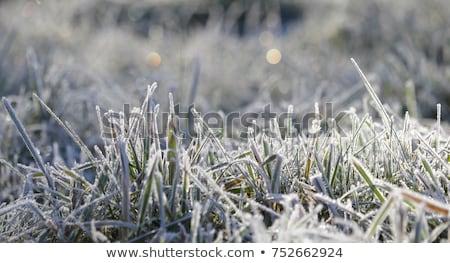 Fagy fű természet kert park időjárás Stock fotó © bmonteny