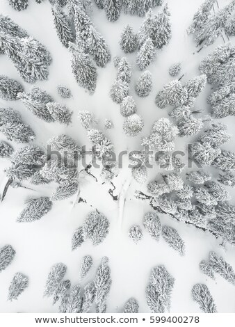park aerial view with frost Stock photo © PixelsAway