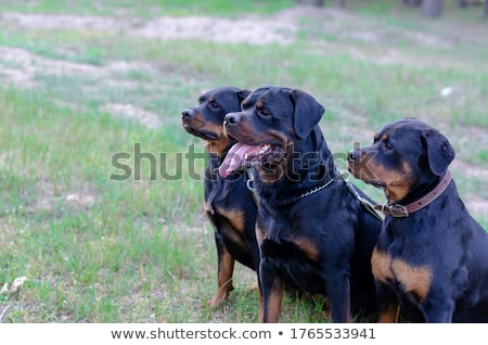Chien distance permanent herbe ciel heureux Photo stock © mayboro1964